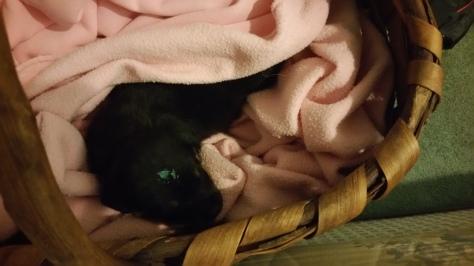 Simba, 5 weeks